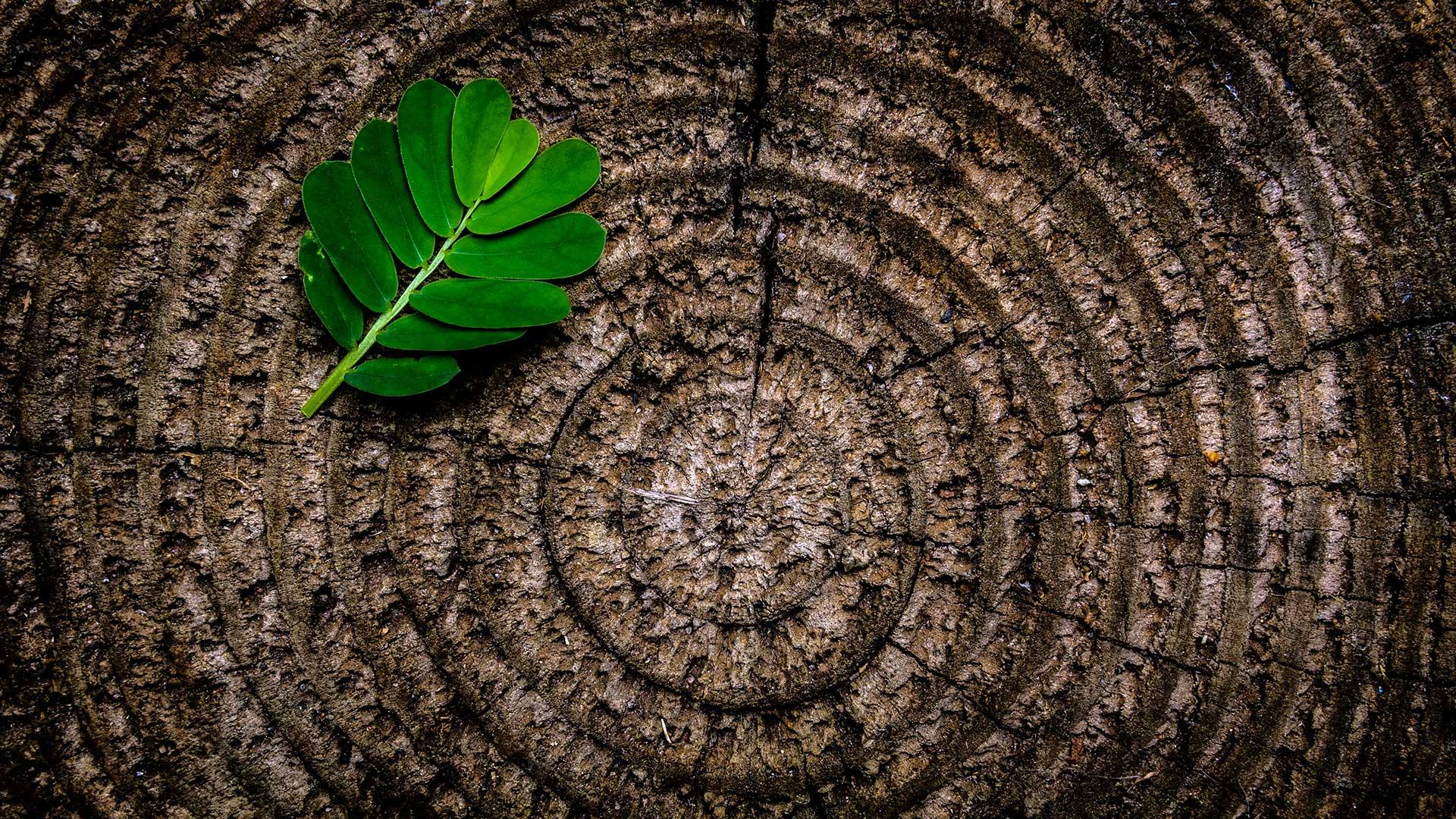 """Featured image for """"Vedvarende energi hos Onlime"""""""